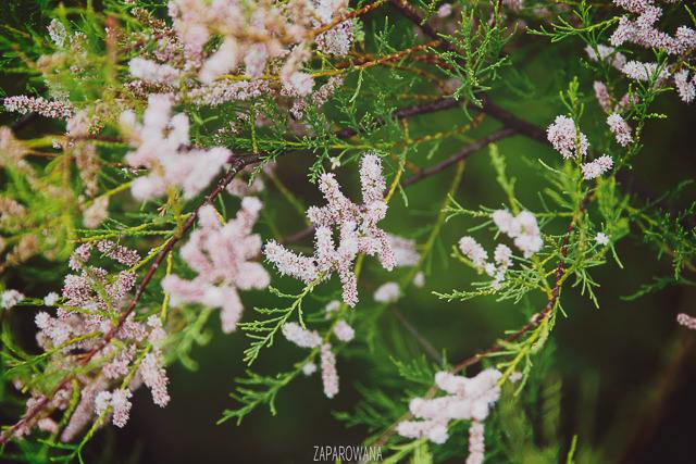 Botany Bay - Margate - ZAPAROWANA-8-2