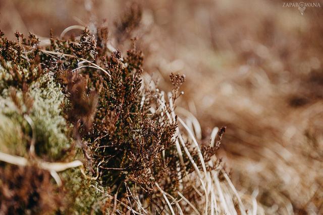 056 - Szkocja - Loch Lomond i okolice - ZAPAROWANA_