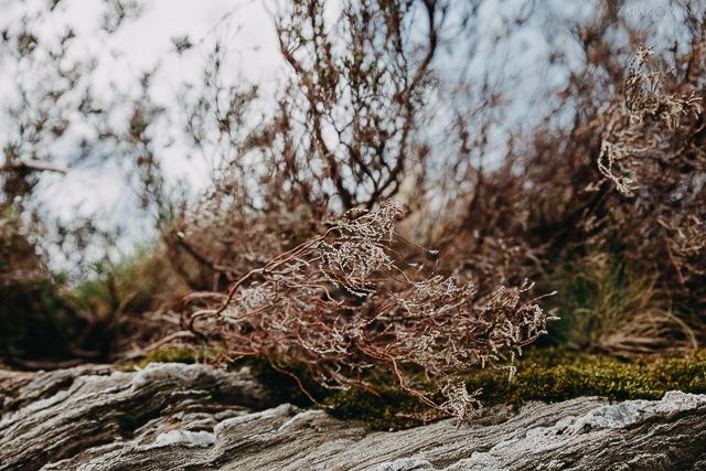 016 - Szkocja - Loch Lomond i okolice - ZAPAROWANA_
