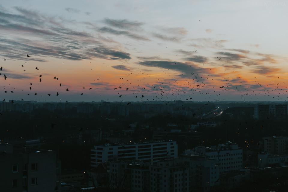 Domowe historie - Święta - ZAPAROWANA-21